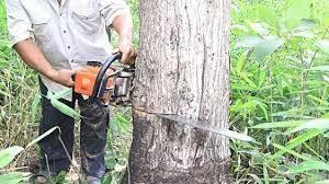 Jasa Tebang Pohon Profesional Tigi Kabupaten Deiyai Provinsi Papua