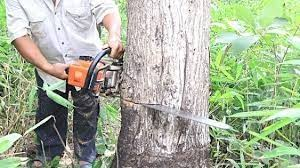 Jasa Tebang Pohon | Potong Pohon | Pangkas Dahan Pohon Profesional   Banjarnegara Kabupaten Banjarnegara Provinsi Jawa Tengah