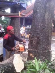 Jasa Tebang Pohon | Potong Pohon | Pangkas Dahan Pohon Profesional   Rembang Kabupaten Rembang Provinsi Jawa Tengah